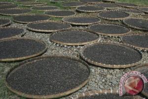 Lezatnya Kecap Jamur Tiram Produksi Temanggung