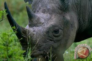 Polisi Kenya tangkap tiga tersangka pemburu badak