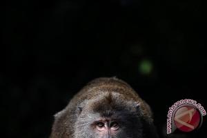 Hampir 50 kera kelaparan diselamatkan dari kebun binatang di Afrika Selatan