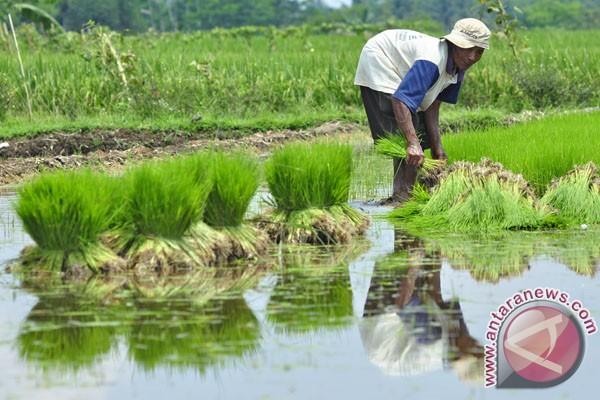 Pemkab Banyumas raih penghargaan pertanian