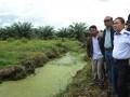 Menhut Zulkifli Hasan (kanan) bersama Wakil Ketua MPR Ahmad Farhan Hamid (kedua kanan) melihat Kawasan Rawa Gambu Tripa yang berubah fungsi menjadi perkebunan kelapa sawit ketika meninjau kawasan tersebut di Desa Ujong Tanjong, Nagan Raya, Aceh Barat, Aceh, Minggu (6/5). Kemenhut akan berusaha mengembalikan fungsi kawasan rawa gambut itu mejadi wilayah konservasi yang mendukung kestabilan ekosistem lingkungan. (FOTO ANTARA/Saptono)