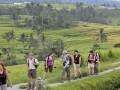 Beberapa wisatawan mancanegara berwisata ke sawah dengan sistem pengairan Subak di Desa Jatiluwih, Tabanan, Bali, Selasa (22/5). Sejumlah pengamat dan tokoh masyarakat Bali menilai bahwa dengan diakuinya Subak sebagai warisan budaya dunia oleh UNESCO akan memberi dampak positif bagi kunjungan wisatawan. (FOTO ANTARA/Nyoman Budhiana)