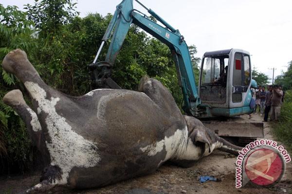 WWF: segera usut kematian 12 gajah Sumatera