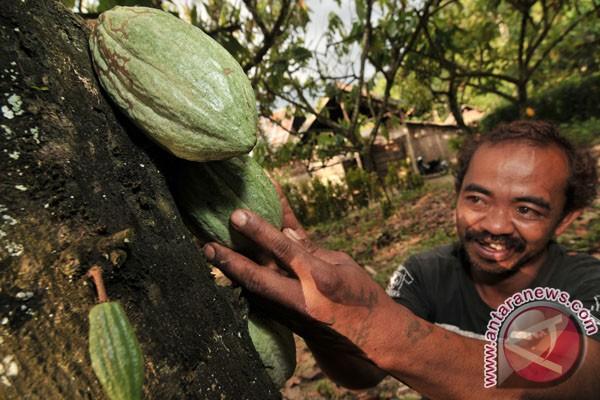 Kakao bisa kurangi tekanan darah