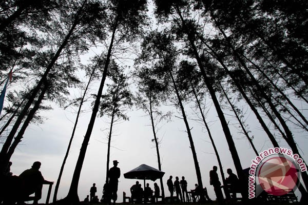 Peserta Rakernas Siwo PWI tanam 1.000 pohon