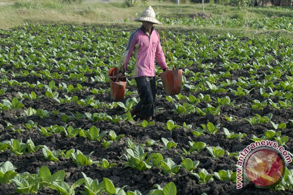 Ribuan petani akan demo di Jakarta tolak RPP tembakau