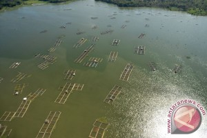 Undip kembangkan karamba ramah lingkungan di Karimun