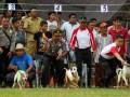 Kapolres Sijunjung AKBP Sugeng Riyadi (tengah) bersama jajarannya secara serentak melepas anjing pada lomba balap anjing di Sijunjung, Kab,Sijunjung, Sumbar, Kamis (7/6). Balap anjing tersebut diikuti sekitar 150 anjing buru babi untuk memperebutkan tropi bergilir Kapolres Sijunjung dan uang kontan sekaligus dijadikan agenda tahunan pariwisata. (ANTARA/Maril Gafur)