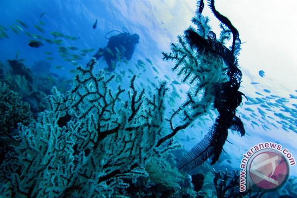 Kerusakan terumbu karang ancam habitat dugong
