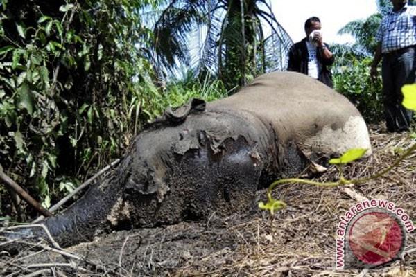 WWF prihatin pembunuhan gajah di Aceh