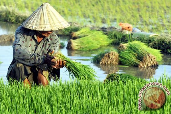 Kementan diminta perbaiki infrastruktur pertanian