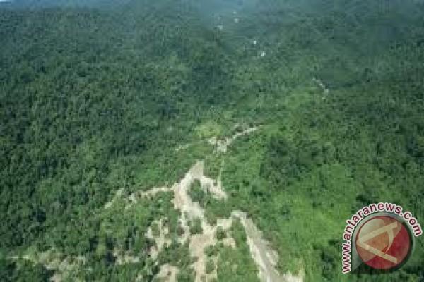 Luas hutan di Sulteng menurun