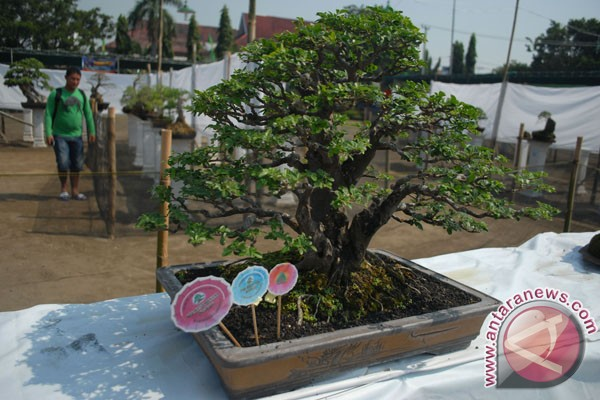 Bonsai Indonesia diakui dunia