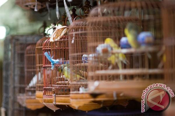 Pasar Pramuka, surganya penikmat burung