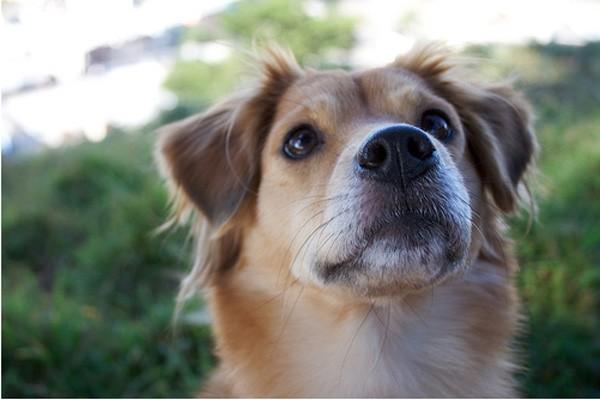 Anjing mungkin memahami kesedihan manusia