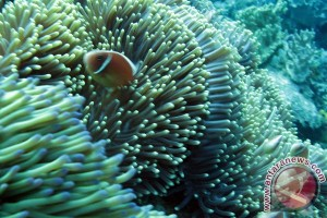 Three key problems encountered in preservation of coral re