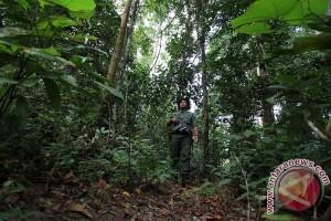 Pemerintah diminta menjaga kawasan hutan terlantar