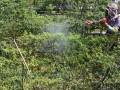 Sutrisno (48) petani cabai, menyemprotkan pupuk daun untuk  menigkatkan kualitas hasil panen agar mampu bersaing dengan cabai impor di Desa Pakis, Malang, Jawa Timur, Jumat (6/7). Dalam lima tahun terakhir, nilai impor produk holtikultura meningkat hampir 300 persen, yakni pada 2006 berjumlah USD 600 juta, sedangkan 2011 menjadi USD 1,7 miliar. (FOTO ANTARA/Ari Bowo Sucipto)