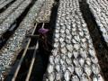 Pekerja menjemur ikan tongkol yang telah diasinkan di kawasan Muara Angke, Jakarta, Sabtu (7/7). Menurut beberapa pengusaha ikan asin di kawasan Muara Angke produksi ikan asin hingga saat ini menurun dari sekitar 30 ton menjadi 15 - 20 ton, penurunan disebabkan oleh turunnya pasokan ikan dari daerah. (FOTO ANTARA/ Novandi K Wardana)