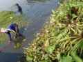 Petugas Pengelolaan Sumber Daya Air (PSDA) membersihkan tanaman eceng gondok dan rumput asem-aseman yang menutupi tepian Situ Cipondoh, Kota Tangerang, Jumat (13/7). Pembersihan rutin dilakukan PSDA, untuk menciptakan kondisi bersih dan nyaman dan diharapkan dapat menarik rekreasi keluarga di danau seluas sekitar 126 hektar itu. (FOTO ANTARA/Iggoy el Fitra)
