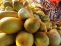 Pedagang menyusun buah Timun Suri yang berasal dari Jonggol,  Bekasi dan Karawang di pasar Induk, Kramat Jati, Jakarta, Senin (23/7). Pada bulan Ramadhan, omset penjualan buah tersebut meningkat tajam karena umumnya masyarakat membeli timun suri sebagai salah satu santapan berbuka puasa, yang dijual dengan harga Rp. 3000- Rp. 4000 per kg. (FOTO ANTARA/M Agung Rajasa)