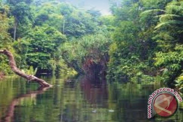 Jambi has largest community forest in Indonesia
