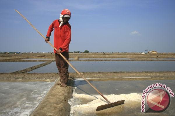 Pemkab Kupang kembangkan tambak garam