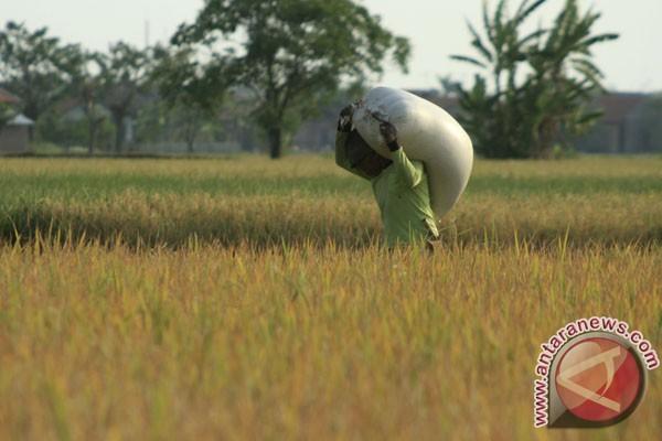 Pemkab Pasaman Barat pertahankan lahan pangan