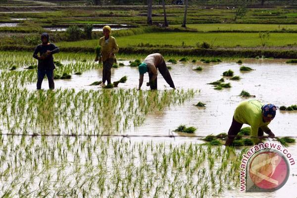 Gorontalo Utara siapkan daerah sebagai produsen pangan