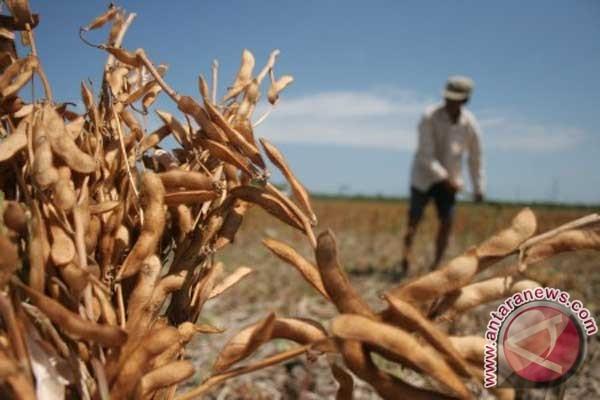 Pemerintah diminta tingkatkan produksi kedelai nasional