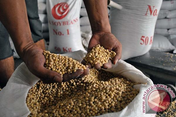 Peneliti Indonesia banyak hasilkan kedelai varietas unggul