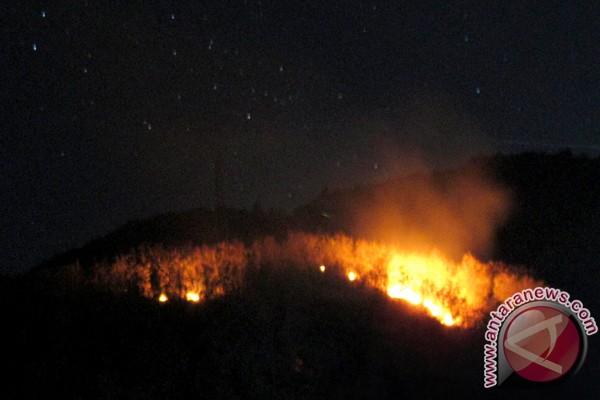 Lima hektar hutan lereng Gunung Sindoro terbakar