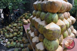 Pedagang buah kelapa muda di Palembang bermunculan