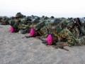 Sejumlah prajurit Korps Marinir TNI AL melakukan sujud syukur sesaat setelah upacara penyematan baret ungu Korps Marinir di pantai Pasir Panjang, Grati, Pasuruan, Jawa Timur, Rabu, (1/8). Sujud syukur ini sebagai ungkapan kebahagiaan karena telah selesai melaksanakan pendidikan selama 6,5 bulan dan secara resmi menjadi keluarga besar Korps Marinir TNI AL. (FOTO ANTARA/Mar Kuwadi)