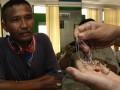 Petugas menunjukkan perhiasan emas yang digadaikan di Pegadaian Pasar Senen, Jakarta Pusat, Rabu (8/8). Memasuki Ramadan dan Idul Fitri, PT Pegadaian memprediksi akan mengalami peningkatan omzet hingga 30 persen dibandingkan pada bulan lalu, yang diperkirakan mencapai Rp  1,2 triliun-Rp 1,280 trliun. (FOTO ANTARA/Reno Esnir)