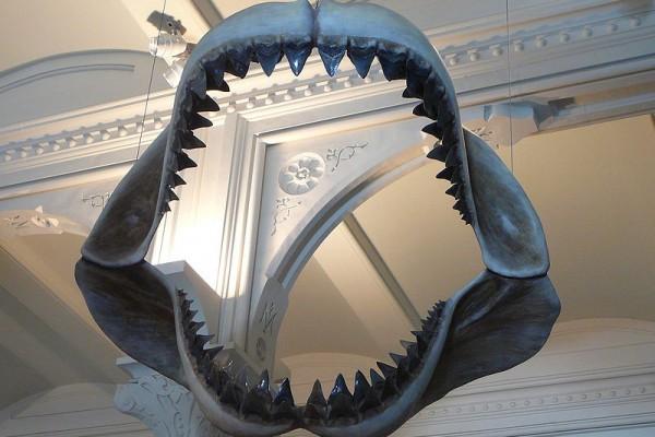 Peneliti identifikasi tiga spesies hiu purba