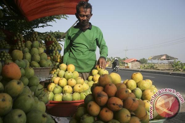 Kemarau untungkan petani mangga Indramayu