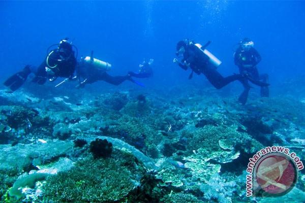 YPS tanami 3.000 bibit terumbu karang