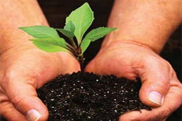 Pertamina tanam 1.000 pohon di Cabangbungin