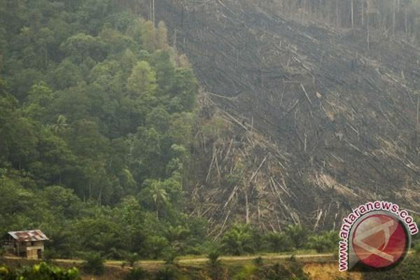 kerusakan hutan riau hutan gundul habis ditebang dan dibakar terlihat