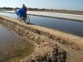 Seorang buruh mengkaut garam di Desa Buder, Pademawu, Pamekasan, Jatim, Kamis (4/8). Mereka mendapat bayaran Rp 30.000 hingga Rp.60.000, per satu ton yang dibagikan kepada sekitar 30 hingga 40 buruh lainnya. (ANTARA/ Saiful Bahri)