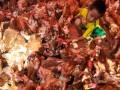 Seorang penjual ayam berusaha menangkap ayam jualannya di Makassar, Susel, Kamis (25/10). Menjelang hari raya Idul Adha 1433 H, permintaan ayam meningkat hingga 500 persen dan ayam tersebut dijual Rp30 ribu hingga Rp50 ribu per ekor. (ANTARA/Yusran Uccang)