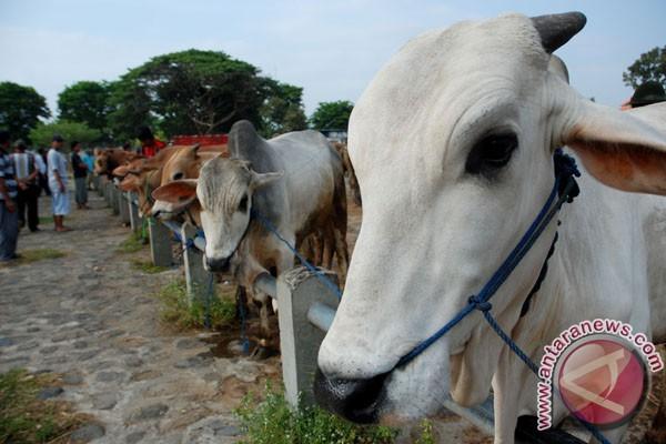 Peternak mulai tawarkan hewan kurban  di Palembang