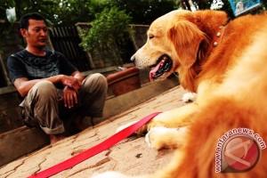 Pecinta anjing di Kalbar galakkan pembiakan anjing ras berkualitas