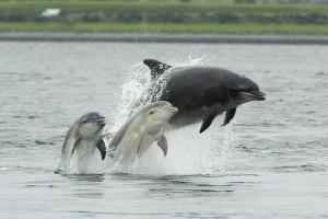 Memburu lumba-lumba akan dihukum