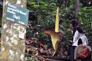 IPB kembangkan genetika pohon di hutan