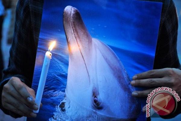 lilin saat mengikuti aksi keprihatinan terhadap matinya lumba-lumba