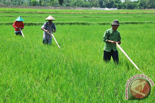 Sukabumi buka 215 hektare lahan pertanian baru