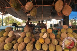 "Durian ""Padang"" serbu Sumsel"