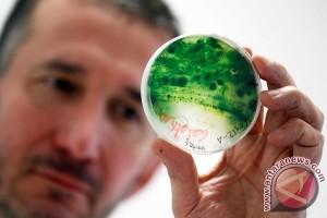 LSM lingkungan kecam rencana agensi penerbangan PBB terkait biofuel